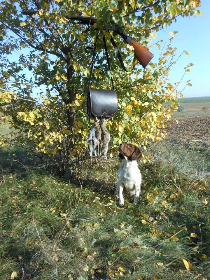 Охота на куропатку с эпаньол-бретоном Totto